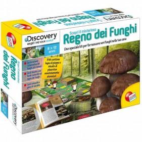 Scopri Il Misterioso Regno dei Funghi